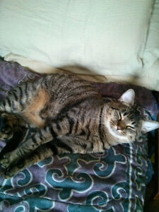 Cats to rehome ASAP