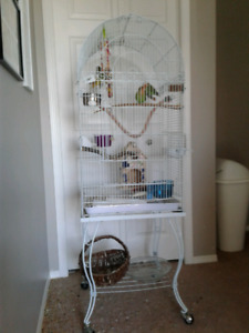 4  Young lovebirds and A Huge cage
