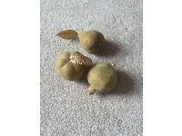 Gold fruit decoration
