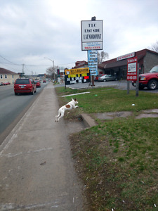 Found dog - medium sized white with brown spots