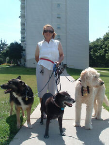 PET SITTING $25 PER DAY, DOG DAY CARE $15 to $20 PER DAY