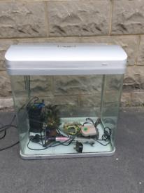 Fish tank tropical set up