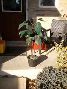 Artificial Plant Kitchener / Waterloo Kitchener Area image 1