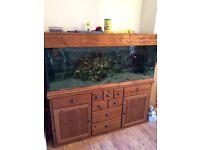 Large aquarium and cabinet