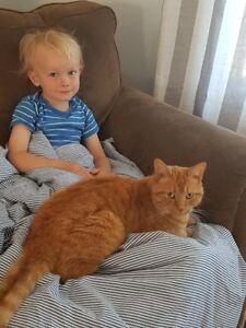 Looking for Orange Cat LISLE area
