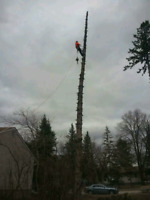 Absolute Tree Removal Service