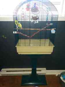 Baby budgie, cage, food and all accessories Peterborough Peterborough Area image 4