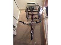 Pashley Picador Adult Tricycle Red