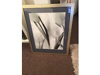 Beautiful Large Framed Pictures Tulips & Daffodils