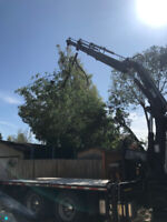 LOWEST PRICE TREE REMOVALS-BOOKING FOR THIS WEEKEND!