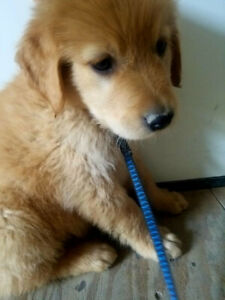 Adopt Dogs & Puppies Locally in Vernon | Pets | Kijiji