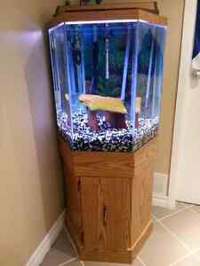 Hexagon aquarium kijiji free classifieds in ontario for Hexagon fish tank lid