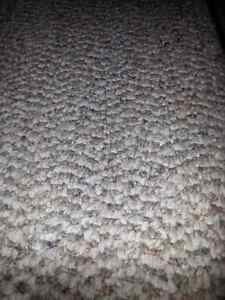 Lightly used low pile carpet