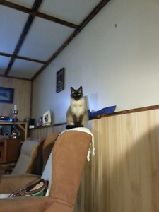 Looking for a Kitty