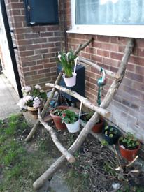 Garden plant ladder for hanging plants