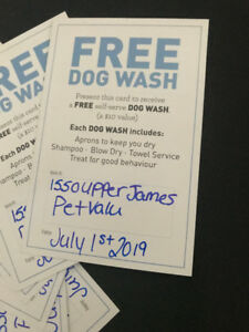 Do it yourself dog wash kijiji in ontario buy sell save with dog wash hamilton upper james 50 off pet value 100 value solutioingenieria Images
