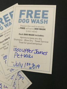 Do it yourself dog wash kijiji in ontario buy sell save with dog wash hamilton upper james 50 off pet value 100 value solutioingenieria Image collections