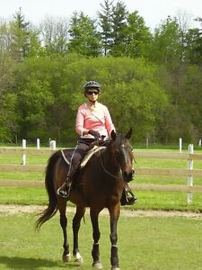 English and/or Western Riding Lessons
