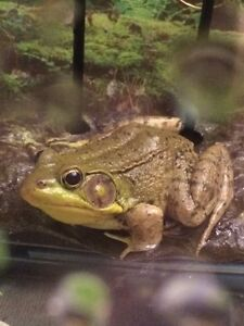 Does anyone know what kind of frog this is