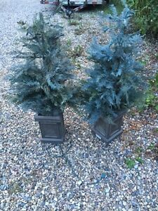 2  Three and a Half Foot Faux Trees