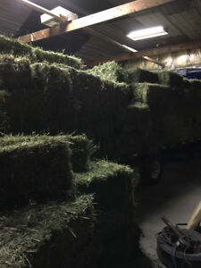3000 hay bales for sale excellent for goats cows sheep and some