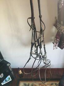Horses Double Bridle