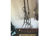 Horses Double Bridle