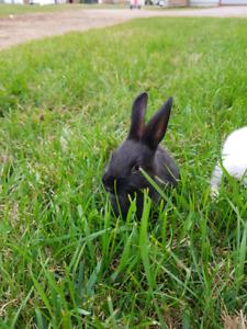 Purebred New Zealand Bunnies