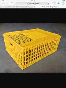 Looking for chicken crates