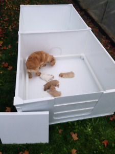 4x4 and 4x8 whelping dog box {collapsible}