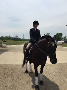 Beautiful mare available for lease Windsor Region Ontario image 6