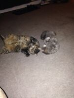 Two amazing cats that need homes