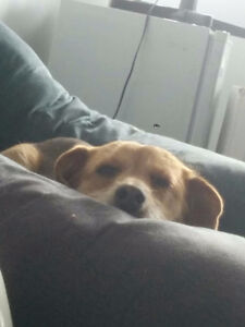 Looking for someone to take care of my dog