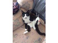 Missing cat, Edmonton N9 please help