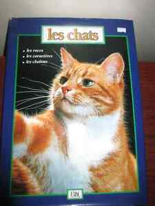 Gros livres Kittens, les chats, Phoques et Otaries Gatineau Ottawa / Gatineau Area image 5