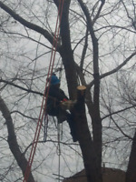 Fully Licensed Tree Service *Storm Damage*