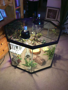 Beautiful reptile tank