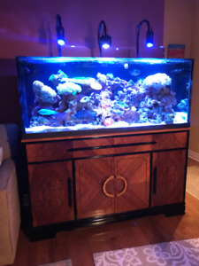 Aquarium Complete Saltwater Tropical Reef Tank