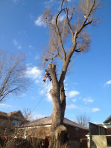 Quality tree work, fair prices