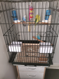 3x budgies with cage