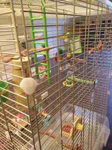Large, clean bird cage, toys and accessories!