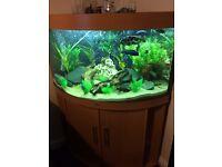 Juwel trigon 190 corner fish tank