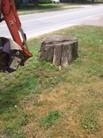 Tree & limb removal, stump grinding, lot clearing insured