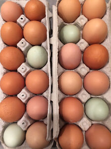 **Blue and Brown Free Range Eggs**
