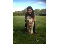 Friendly dog sitter in Greenwich borough