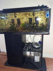 Selling fish tank/ aquarium - full set