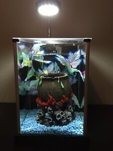 Need gone asap!2.5 gallon glass tank with whisper filter