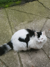 Male cat for're homing