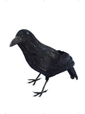 Krähe, ( Rabe / Amsel ), Halloween Requisit, Kostüm - Krähe Rabe Kostüm