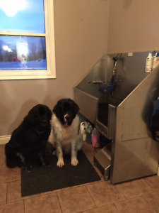 Dog wash kijiji in toronto gta buy sell save with very reasonable dog washing solutioingenieria Image collections